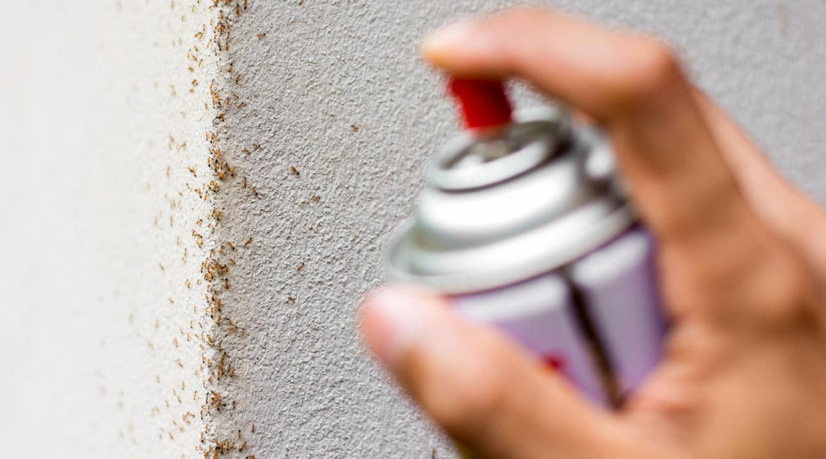 A hand spraying some insecticide onto a line of ants on a wall