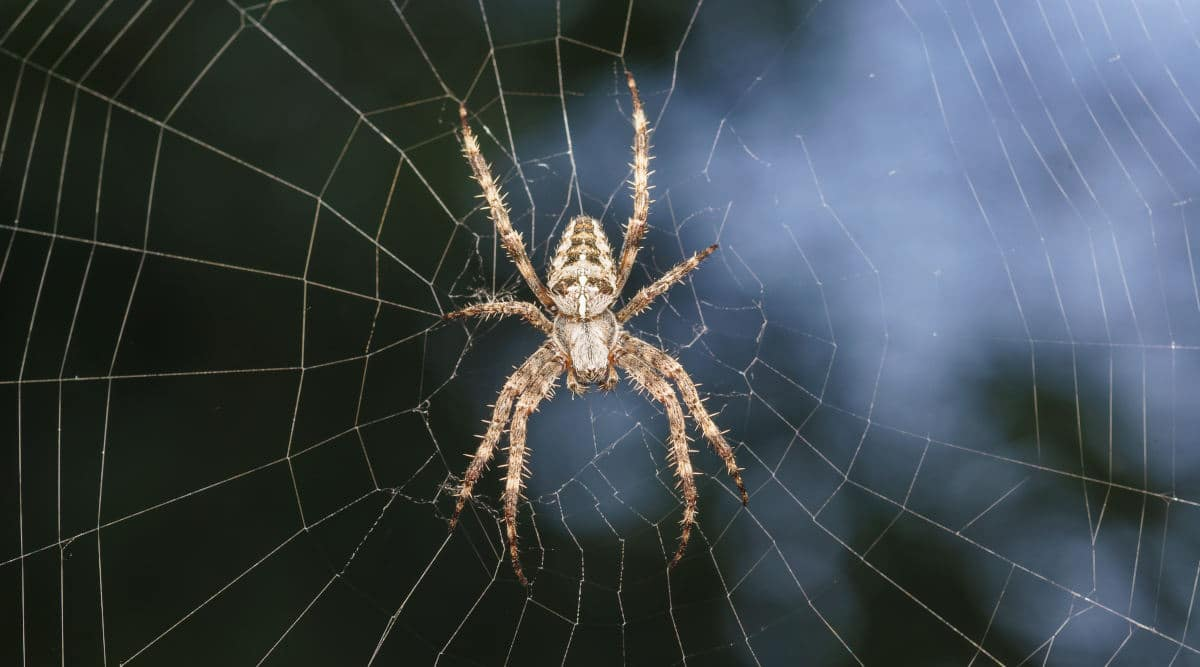 Macro shot of a spider in it's web