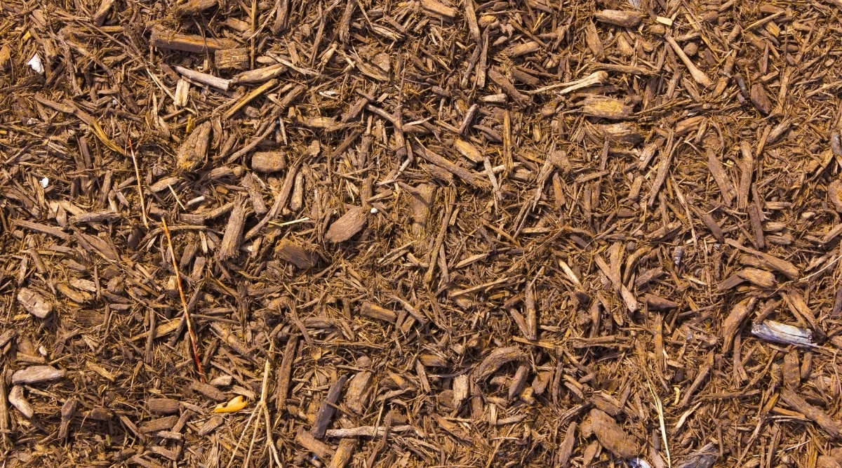 Mulch Roach Attractant
