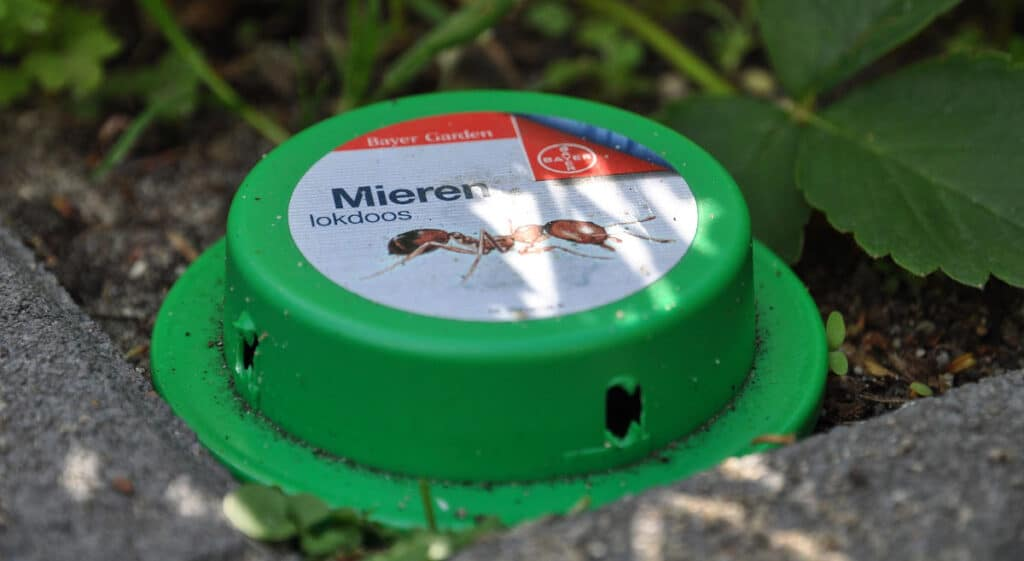 A green ant bait station laid outside