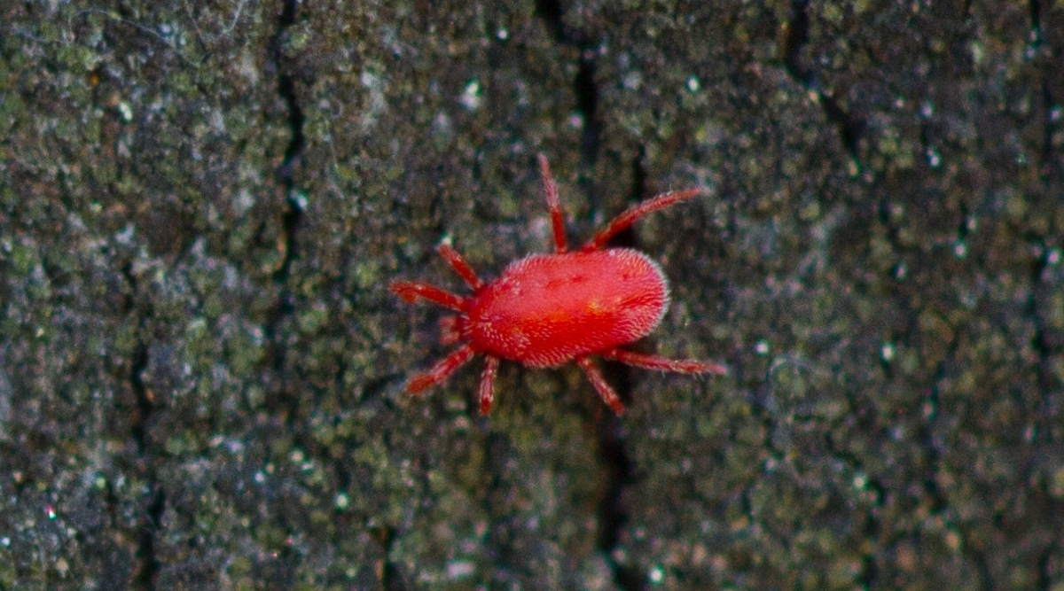 Red Bug on Concrete