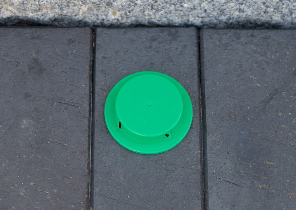 Green ant trap on outdoor path
