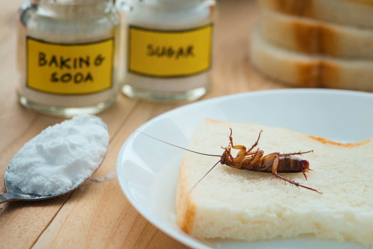 Baking soda, sugar, and a dead cockroach on a slice of bread