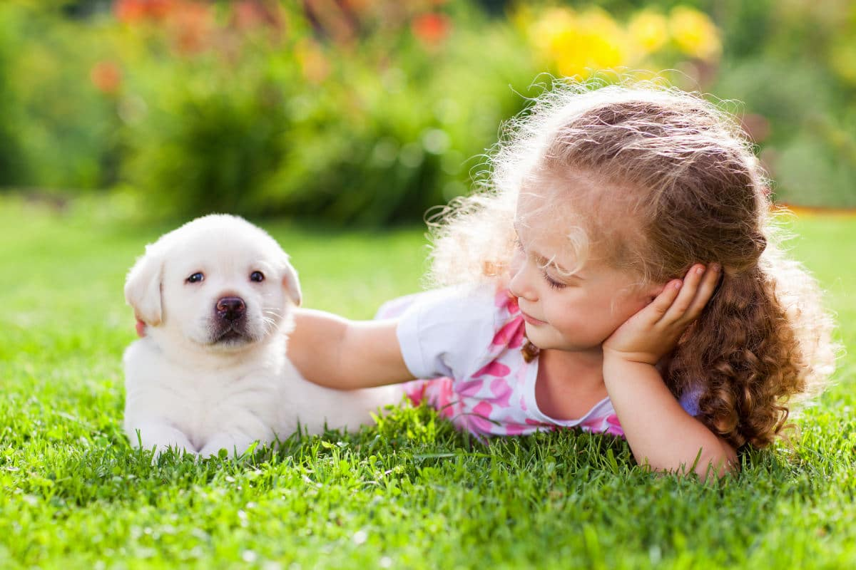 dog and child on grass in summer