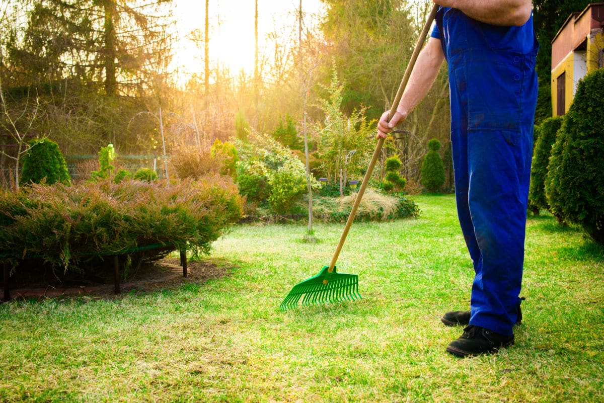 A man raking grass and an ant hill