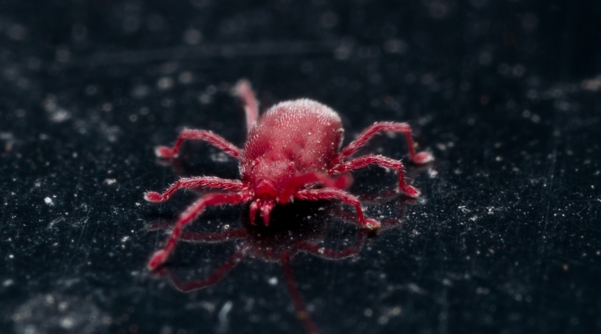 Red bug is sitting on concrete slab
