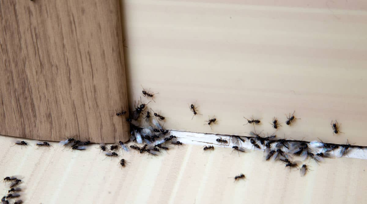 How To Get Rid Of Ants In The Bathroom, How To Get Rid Of Tiny Ants In Bathroom