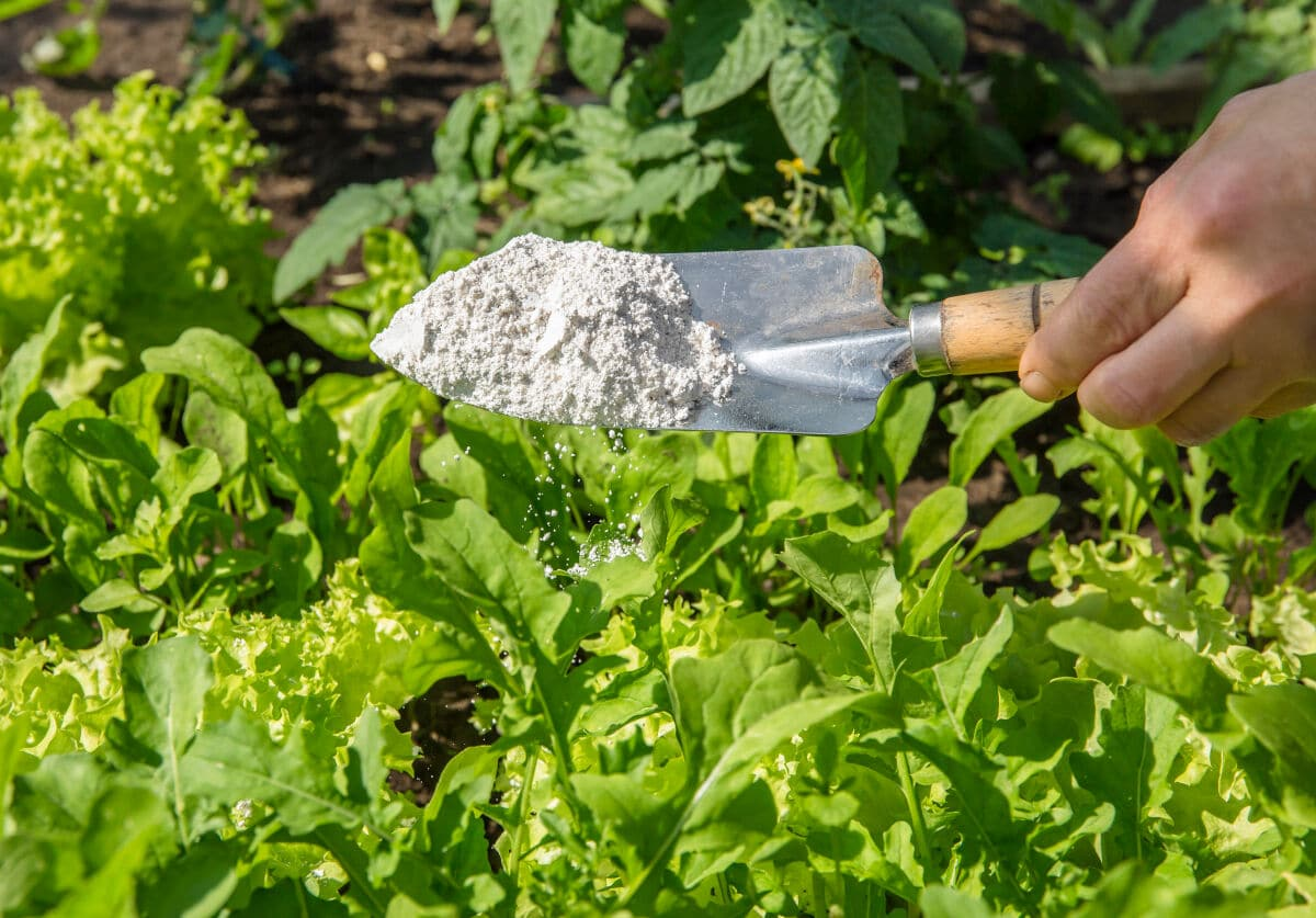 diatomaceous earth on a garden trowel against a grass background
