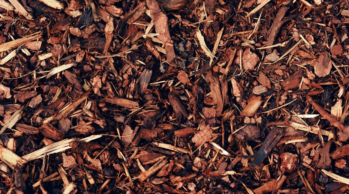 Bark Mulch attracts roaches