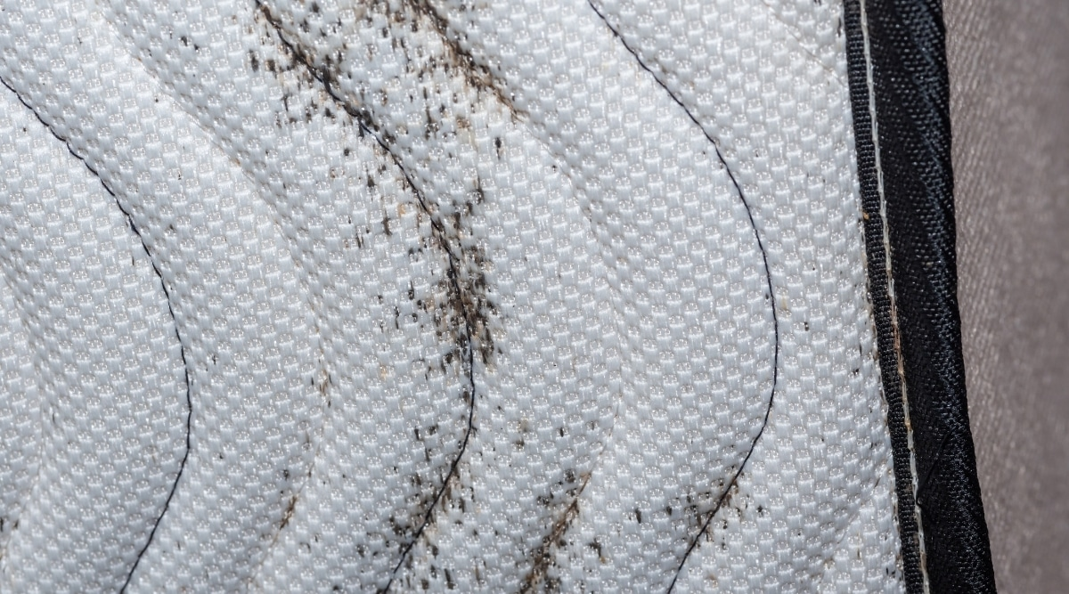 Bed Bugs on Mattress Top