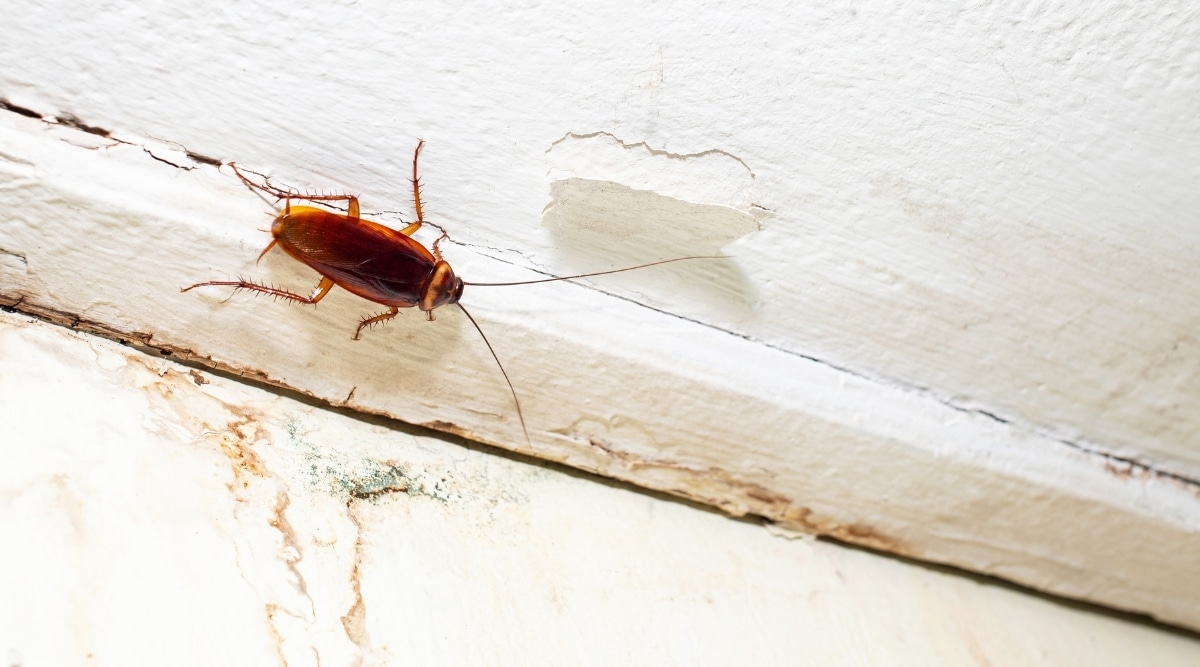 Insect on the Ceiling