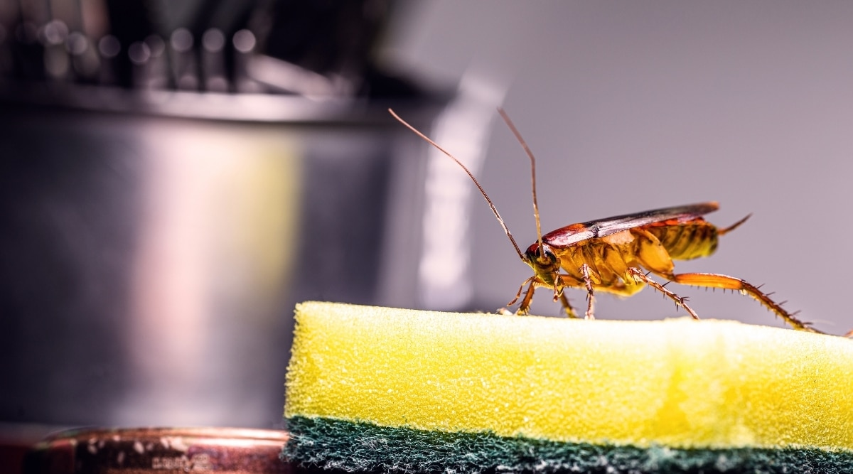 Insect on sponge in kitchen.