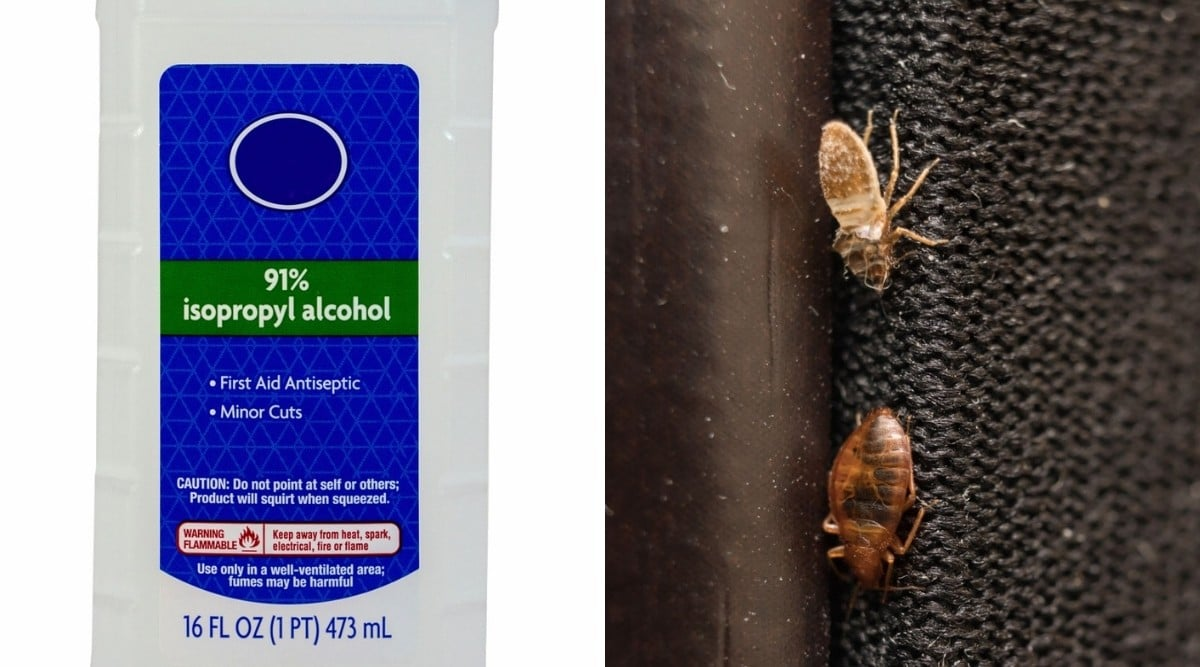 Two photos side by side, one of rubbing alcohol and one of two bed bugs.