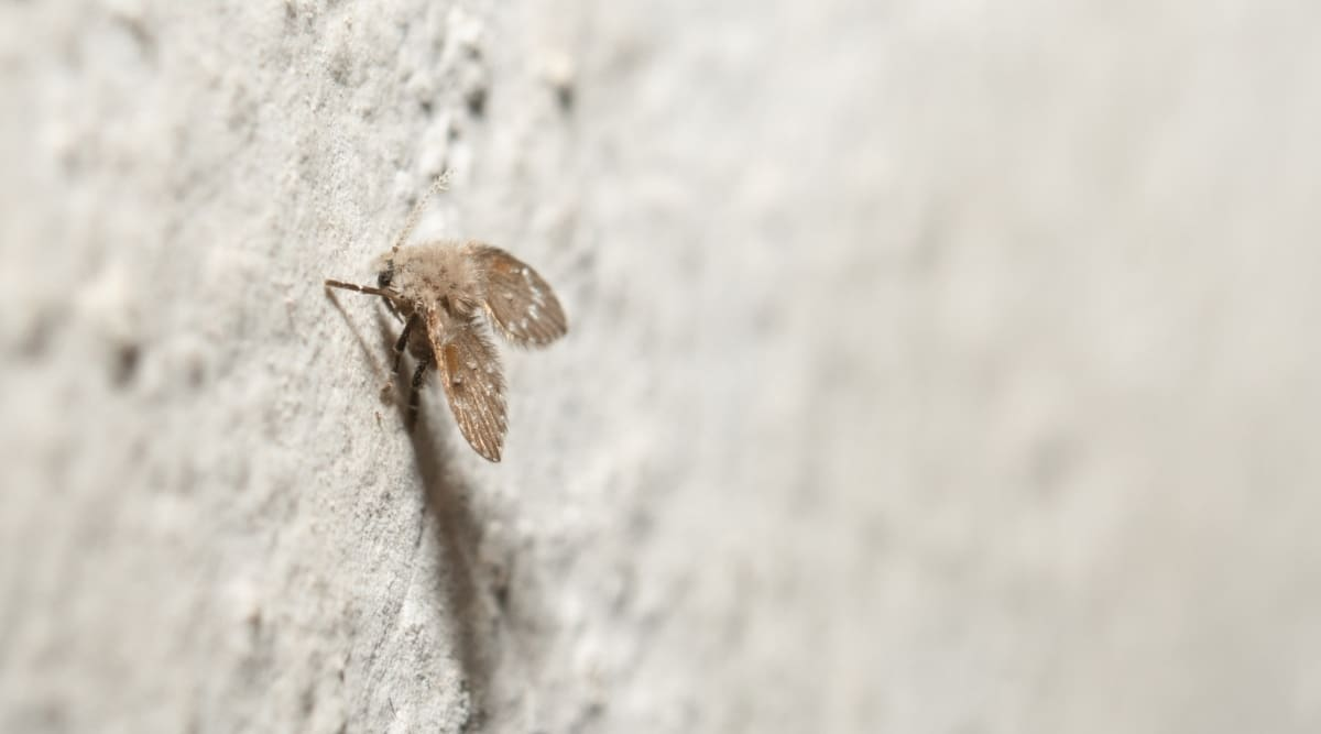 Getting Rid of Insects in House