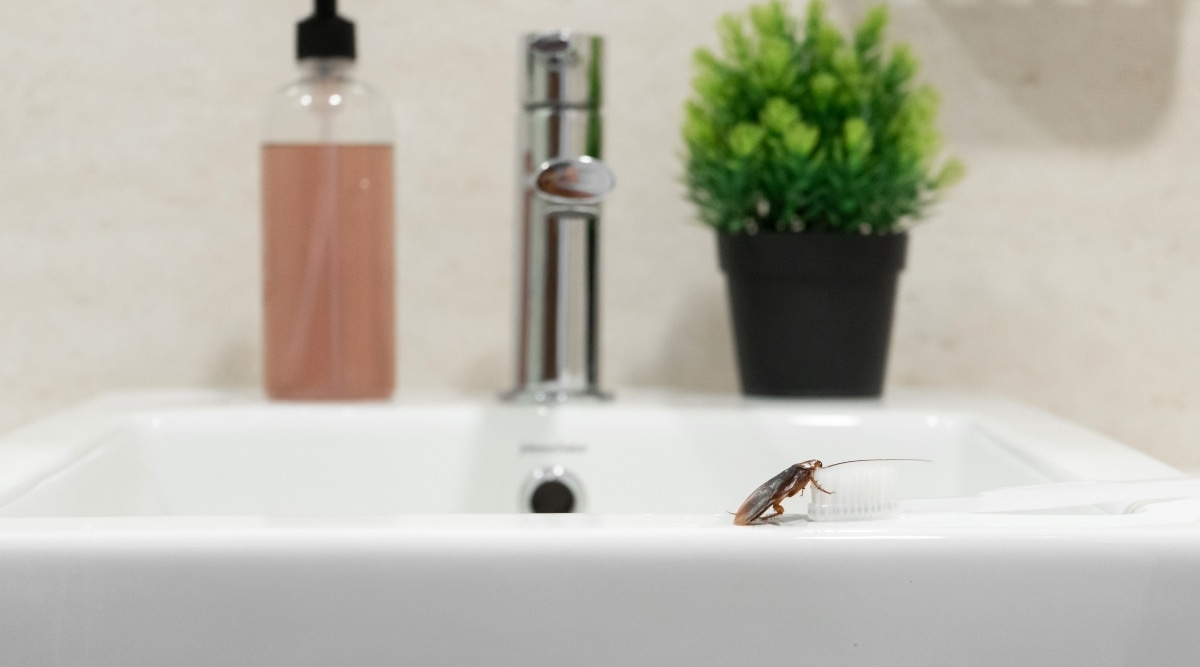 Insect on toothbrush in bathroom.