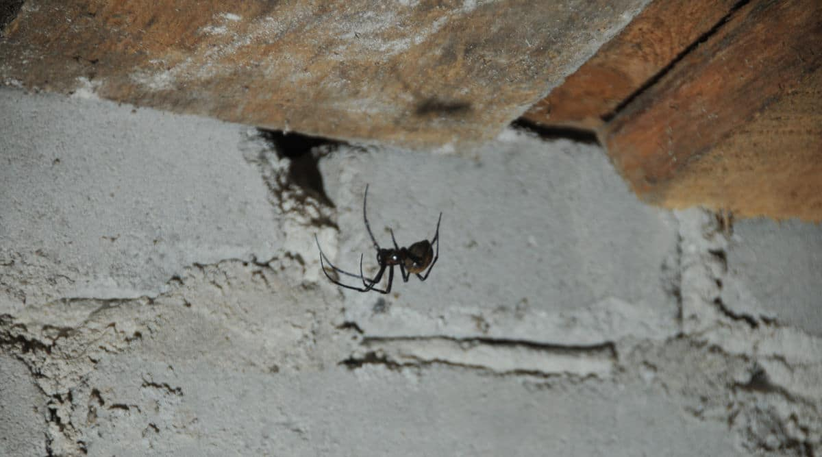 A spider in it's web in the corner of a basement ceiling