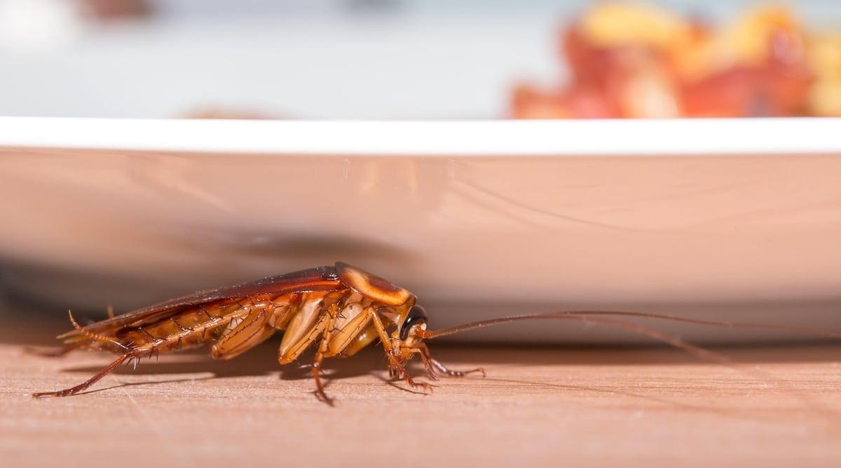 Roach Hiding Under Desk