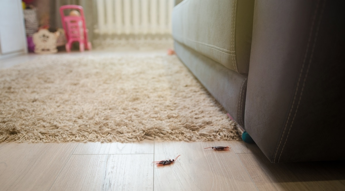 Insects near furniture