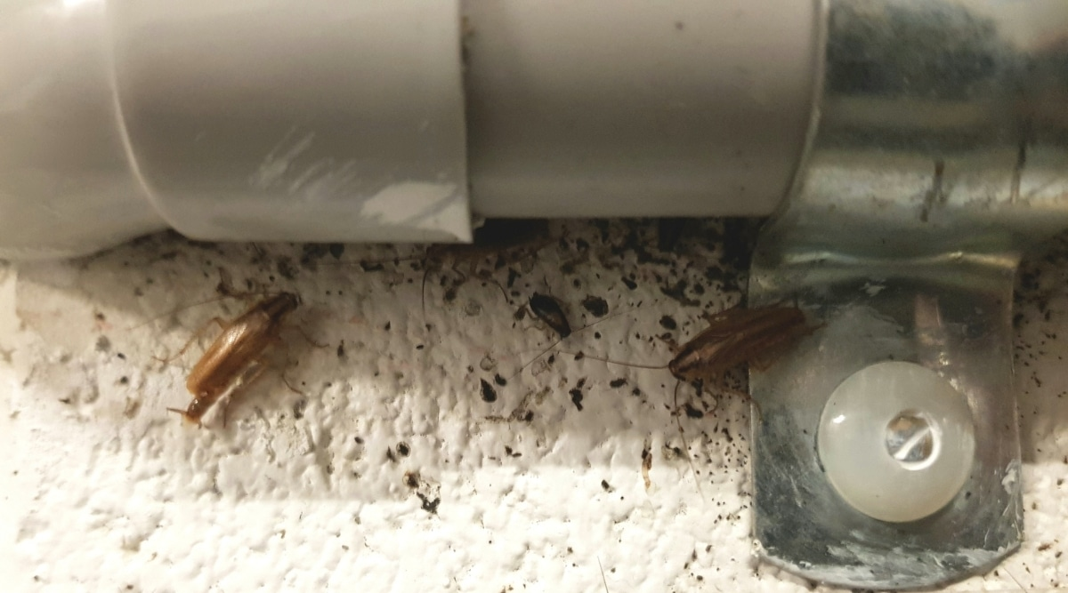 Bugs near Pipes in Wall