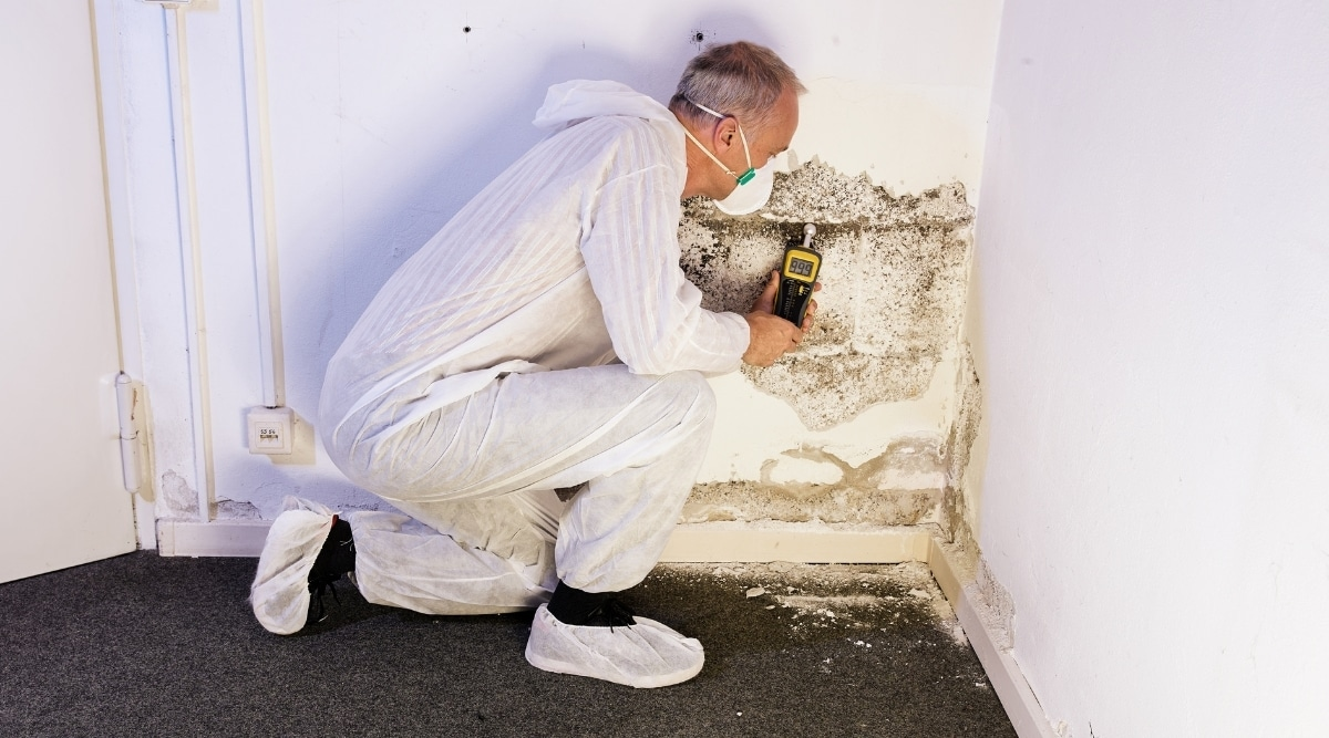 Termite Inspector Looking at Wall
