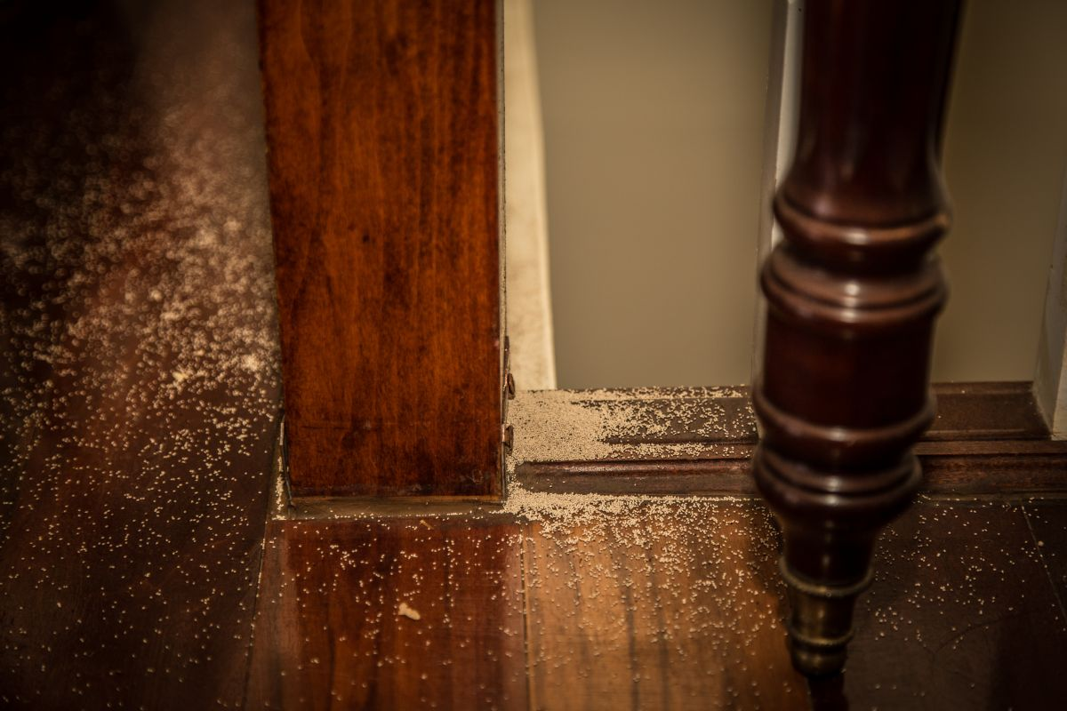 Termite poop gathered at the base of a wooden stair bannister