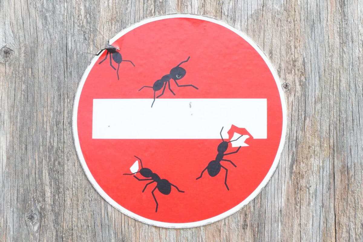 Picture of 3 ants on a stop sign