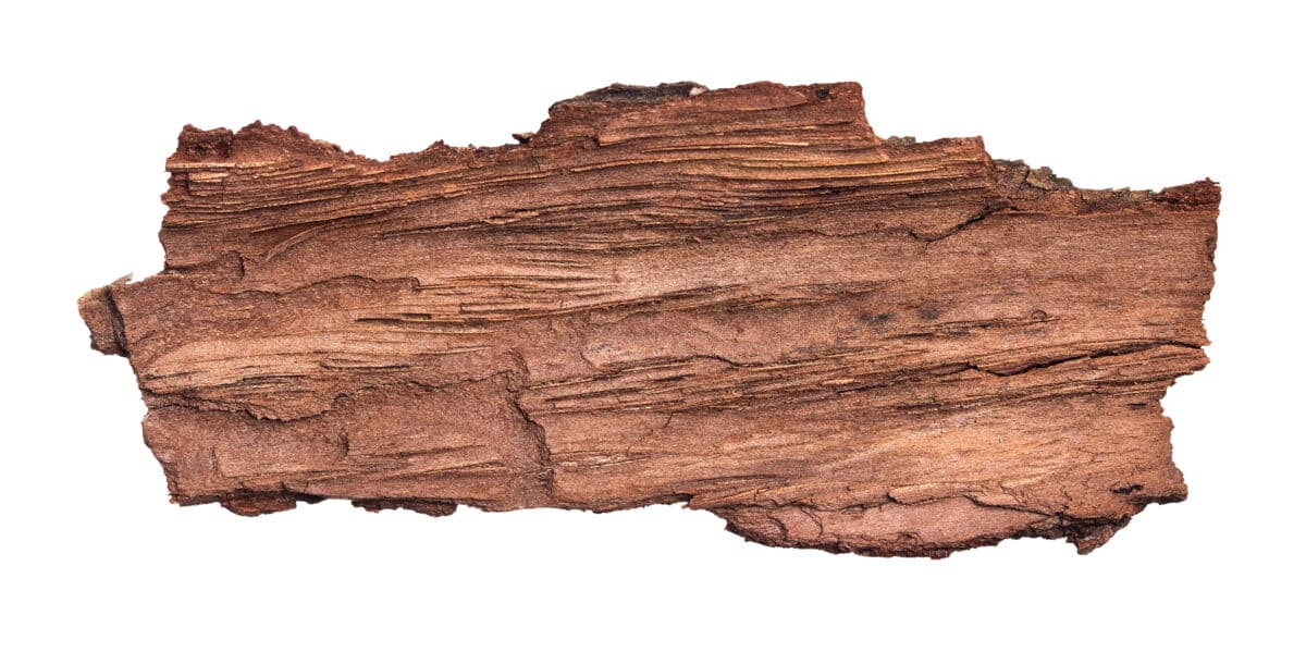 a rough piece of wood isolated on white