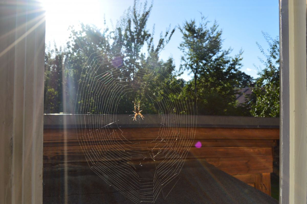 Spider web in a window with the hot sun beating down