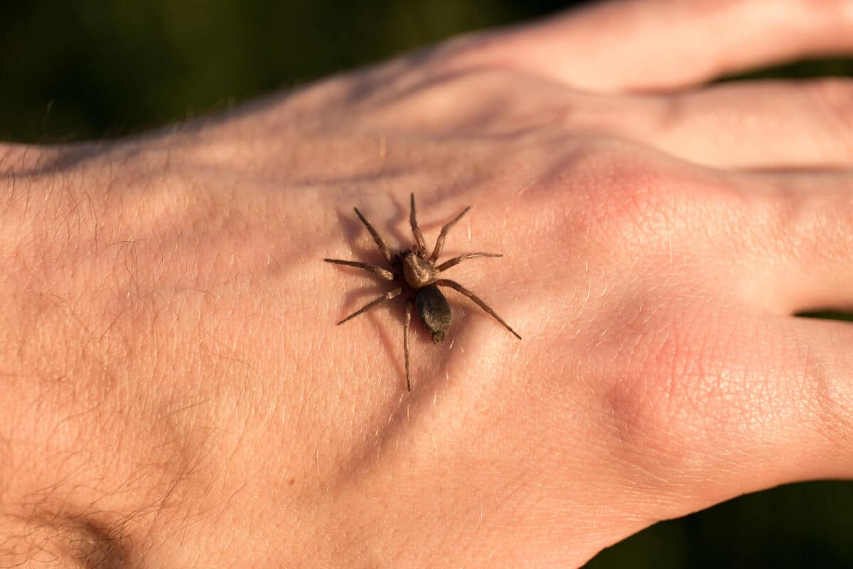 A small spider on the back of someones hand