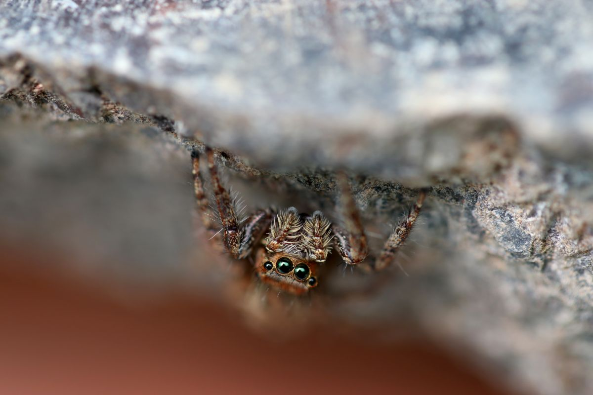 A small spider hiding under a rock
