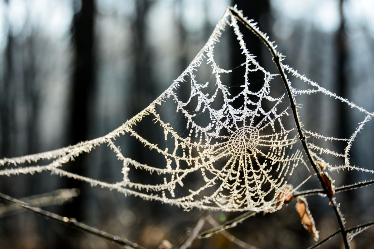 A spider web with frost on every part
