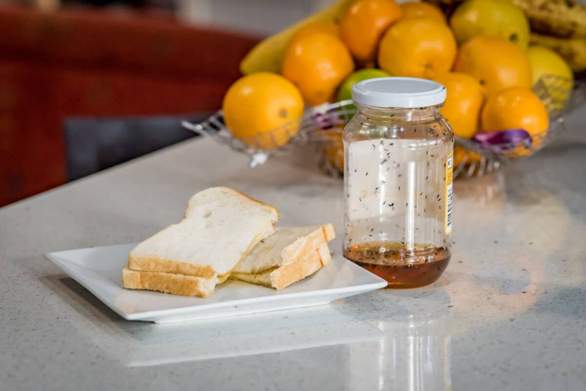 A shot of a kitchen worktop with a sandwich and honey being swarmed by ants