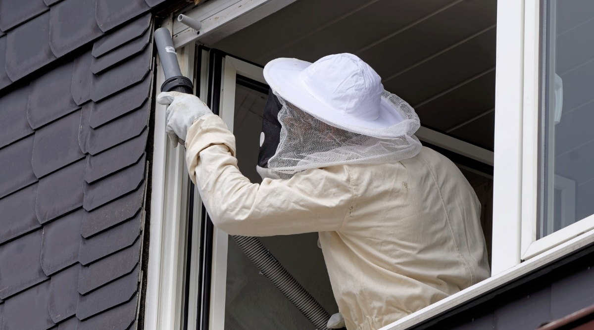Pest Control agent removing hornet's nests from home