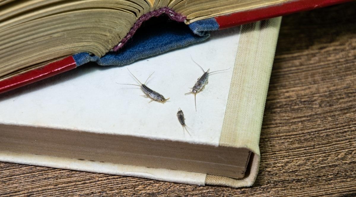 Bugs on Books