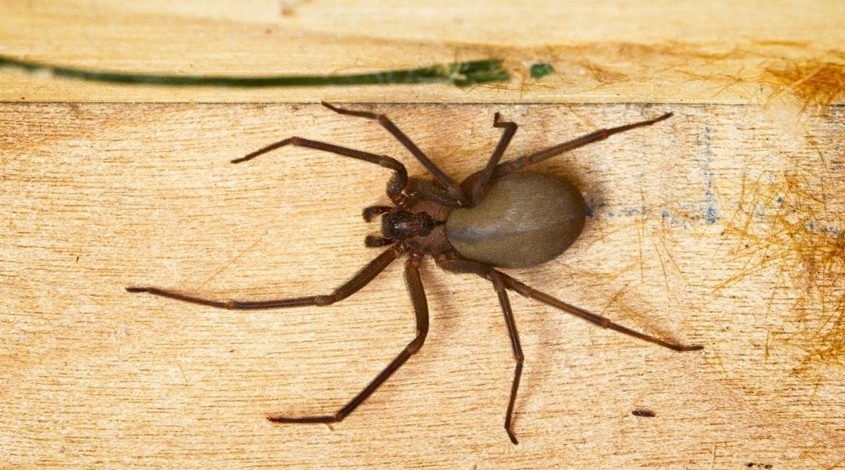 Arachnid on Wooden Plank