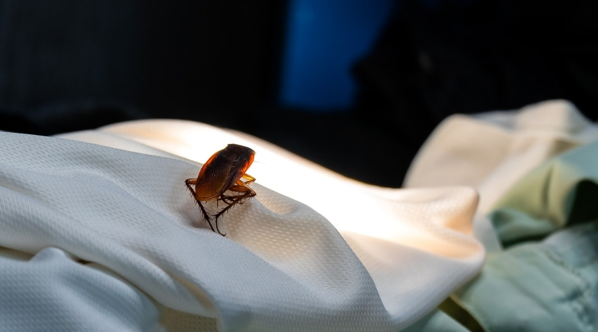 Cockroach in Area with Light