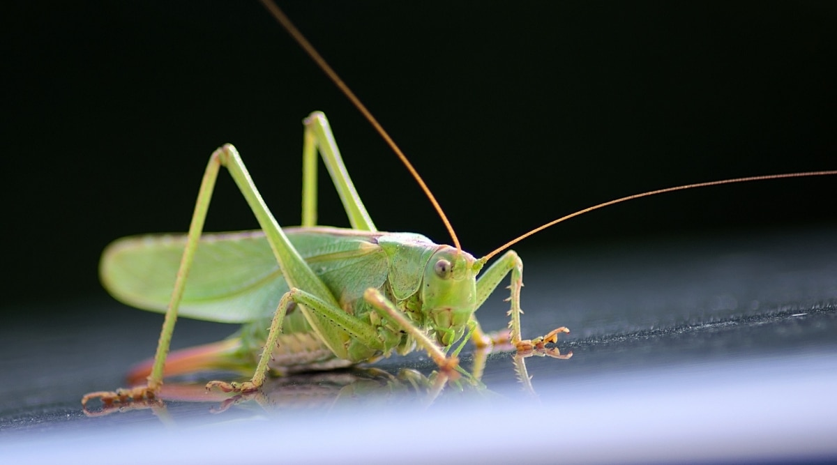 Grasshopper on Counter